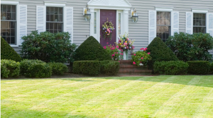 Image result for home lawn pesticide