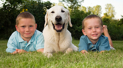 Lawn fertilization safe enough for the kids and pets to play on.